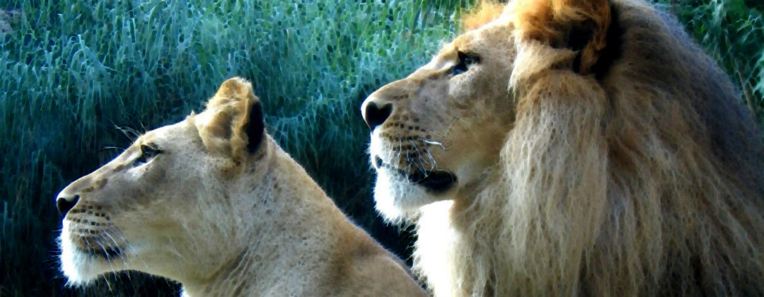 Ledar lejon