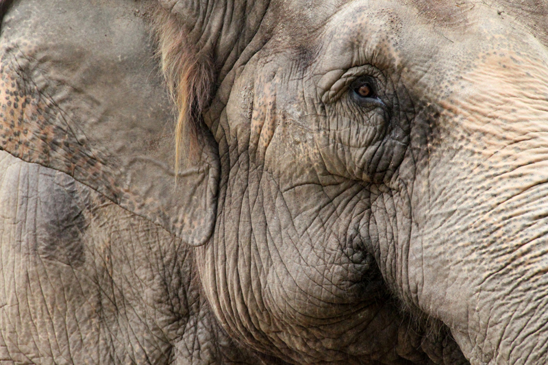 elefanten trygg, stabil och envis i säljet